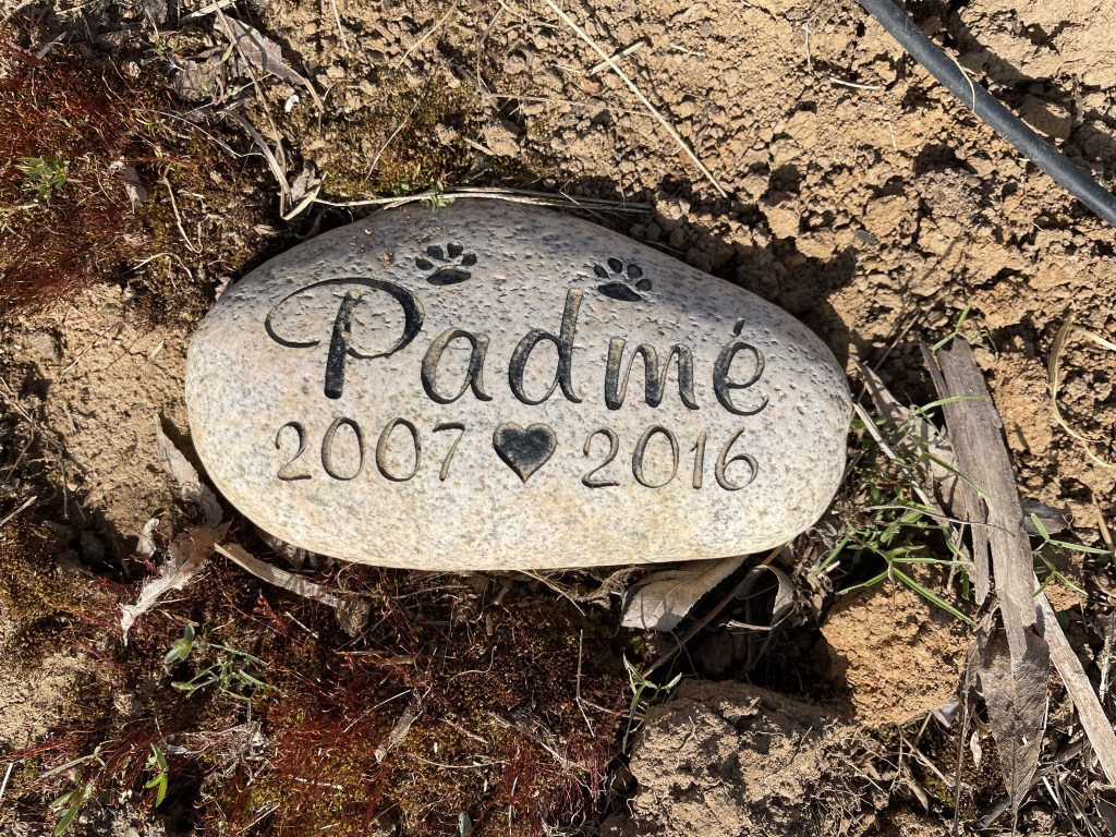 Padmé 2007-2016