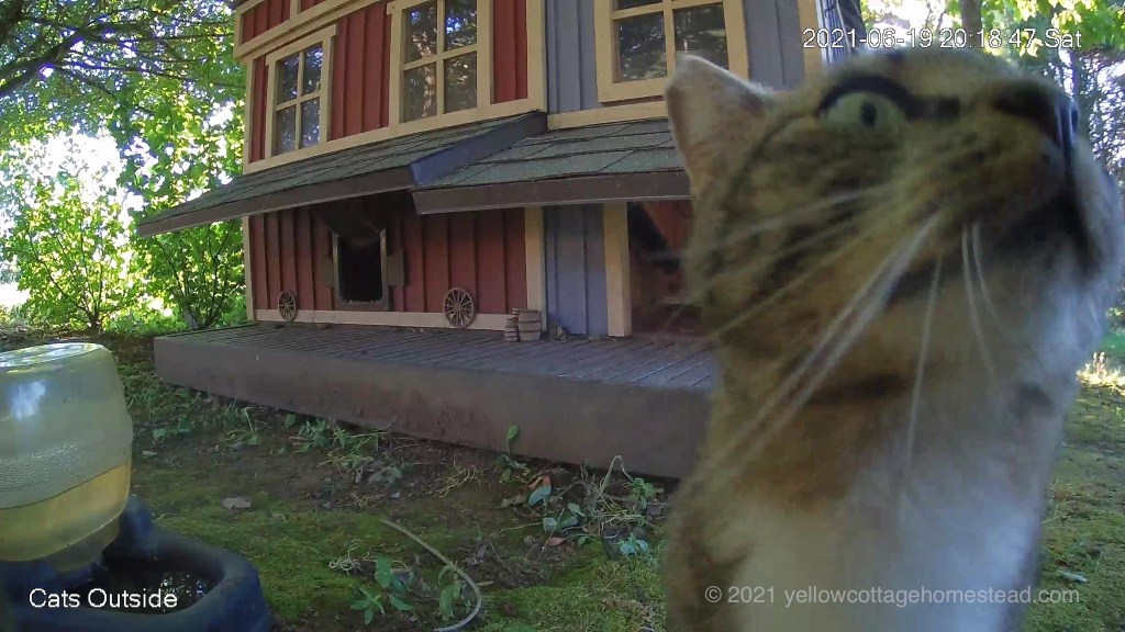 Cat about to jump onto camera housing