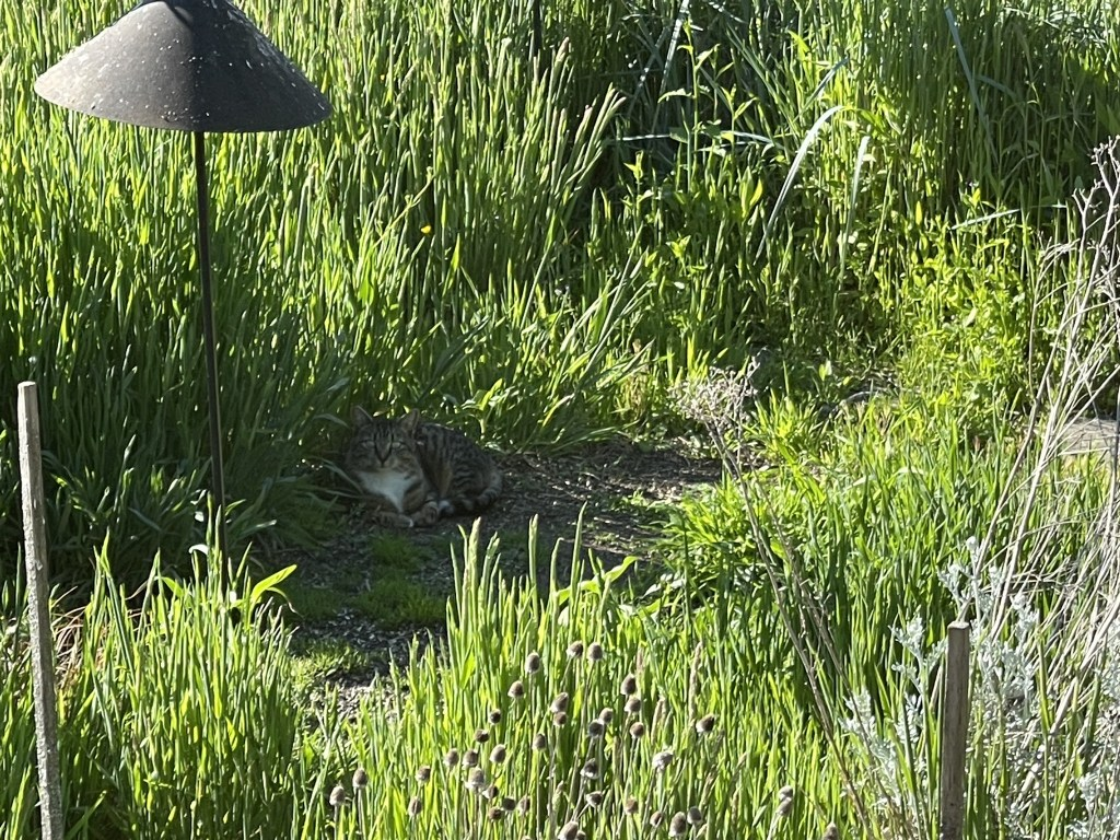 Porcini under bird feeders