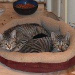 The Studio cats
