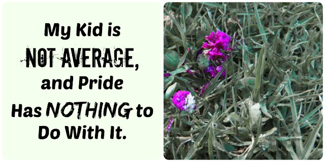 My Kid is Not Average, and Pride Has Nothing to do with it, yellowreadis.com, Image: Purple flowers in grass