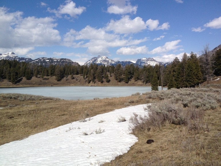 frozen trout lake yellowstone