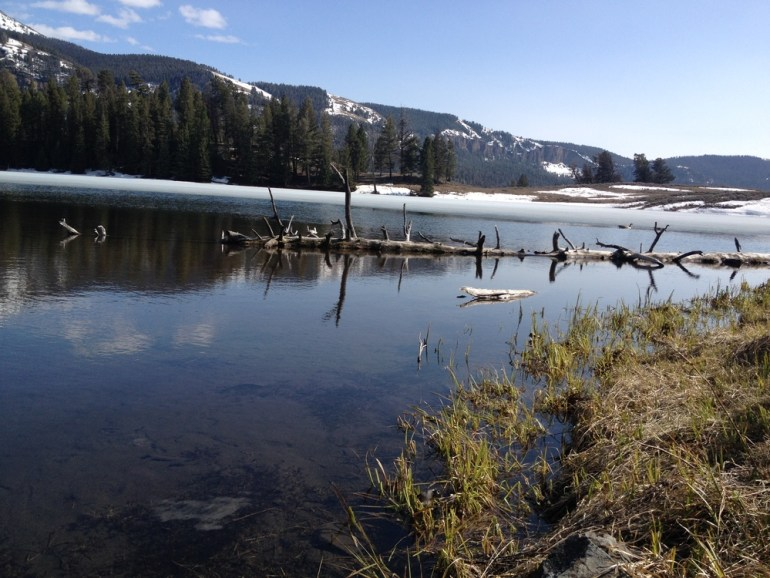 Log in trout lake