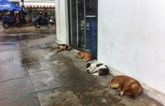The dogs know where is dry when it rains!