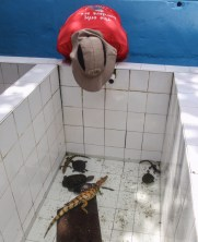 Bruce getting another look at a baby caiman
