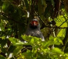 A hawk keeps an eye on us as we do a terrestrial survey