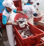 Sorting the catch on the dock