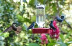 However, Hummingbird feeders can lead to conflict