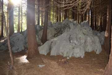 Rocas en el pinar