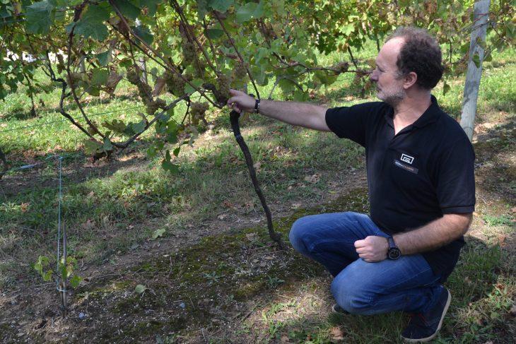 José Ramón en el viñedo