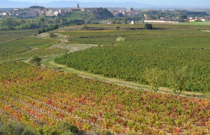 Camino entre viñas desde Haro