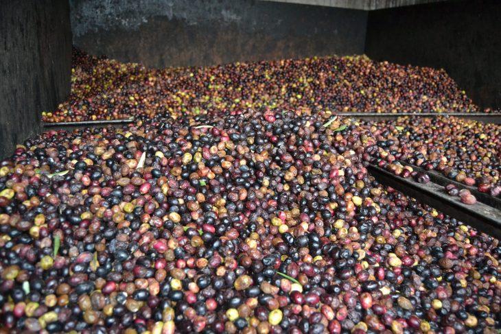 Trujales de aceite de oliva de la Rioja Alavesa