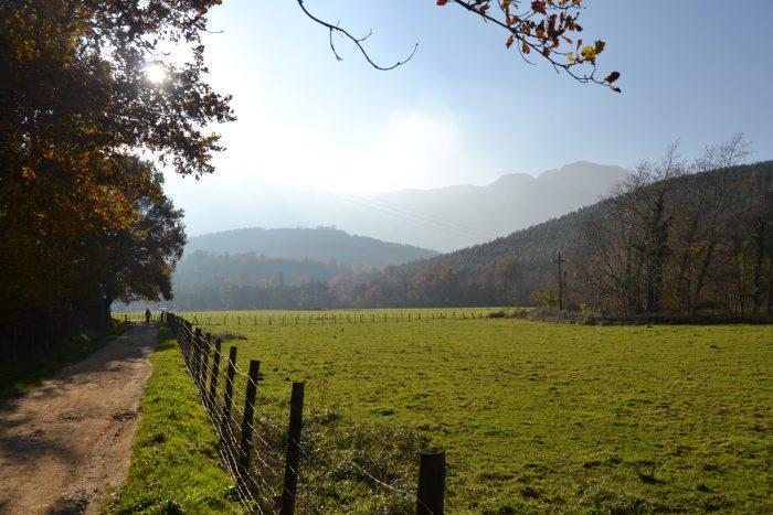 Camino entre campas verdes