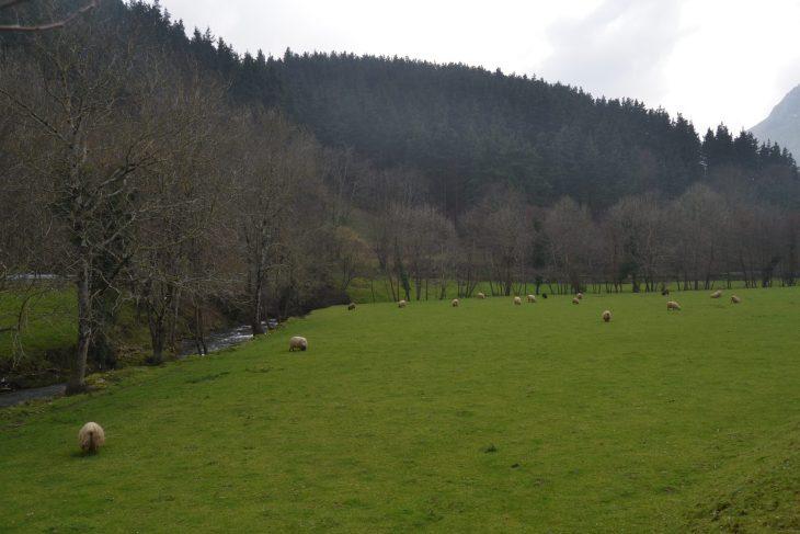 Campas verdes junto al arroyo