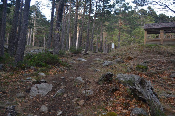 Senda del Bosque