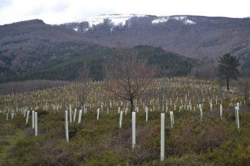 Repoblación de árboles