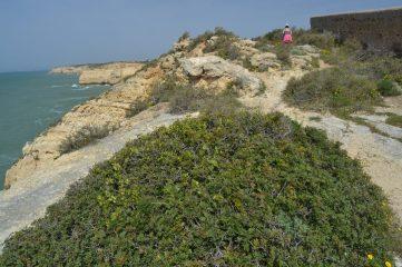 Esther caminndo por la costa