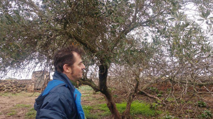 David Aranda entre olivos