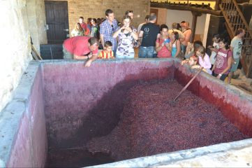 Fiesta de la Pisada en Bodegas Lecea