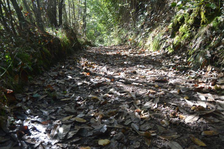 Ruta fácil de las Cascadas del Guanga