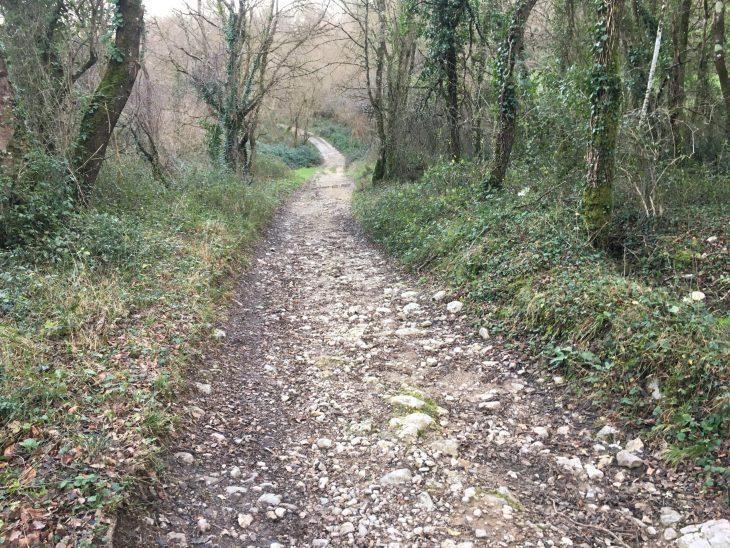 Camino hacia Lezana de Mena