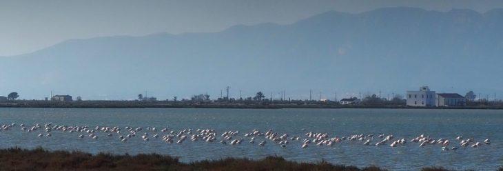 Flamencos en la Laguna de la Tancada