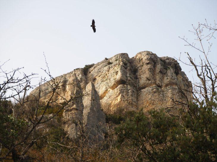 Monte Soila
