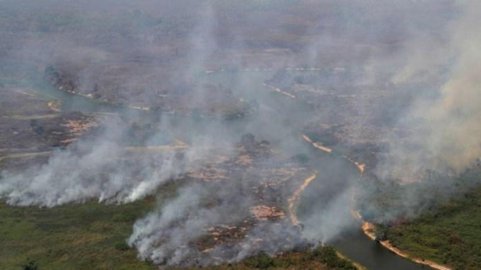 Brezilya'da ormansızlaştırma politikası