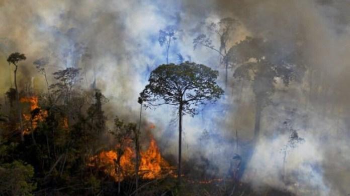 Amazon ormanları her gün yok ediliyor