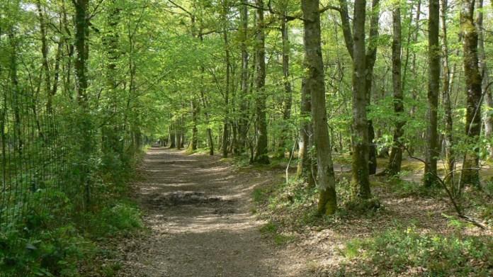 Yeşil alanlar gürültü kirliliği üzerinde etkili