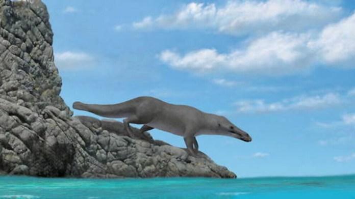 43 milyon yıllık 4 ayaklı balina fosili bulundu