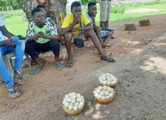 School children now sell guinea fowl eggs on Bolga-Navrongo road