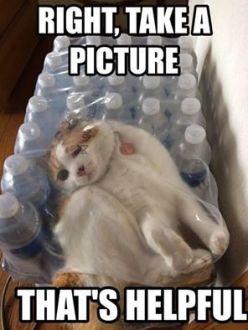 CAT_STUCK_WATERBOTTLE