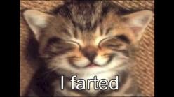 Fart_CAT