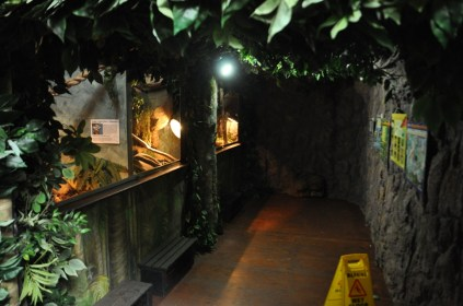 Inside the snake and reptile enclosure.