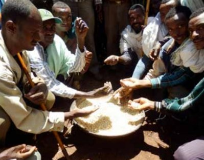 Ethiopian farmers appreciating the quality of maize after storage in metal silo for nine months