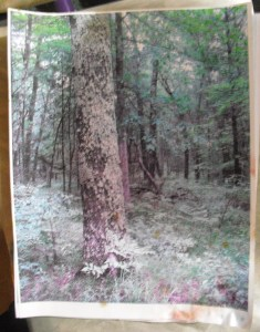 photo of woods in Michigan