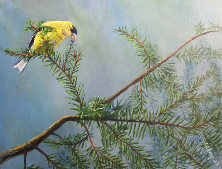 acrylic painting of an American Goldfinch in a pine tree by Yeshuas Child Art