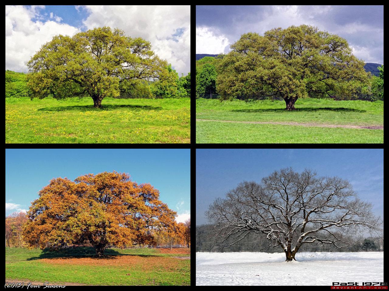 Bir Y Lda 4 Mevsim Yok Ye Il Olan Ne Varsa