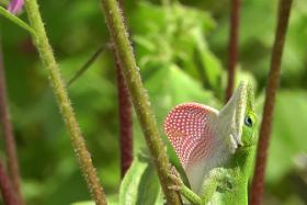 Ausflug zum Fort Worth Botanical Garden in Texas – Wow Geckos!