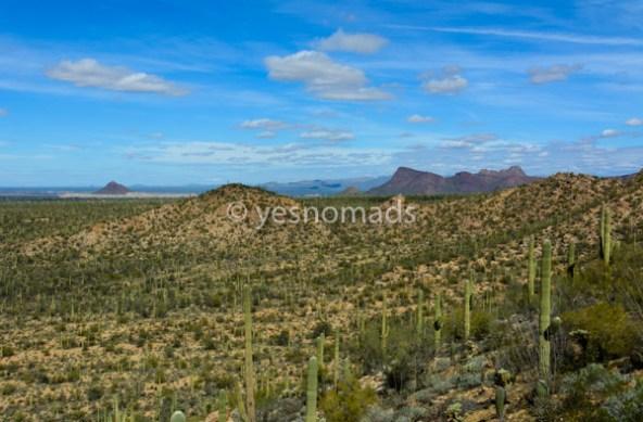 Foto Der Woche – Saguaro Nationalpark in Tucson Arizona