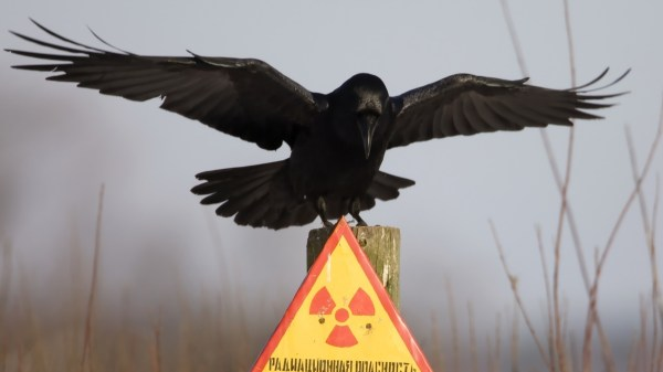 4K Crows Wallpapers High Quality Download Free