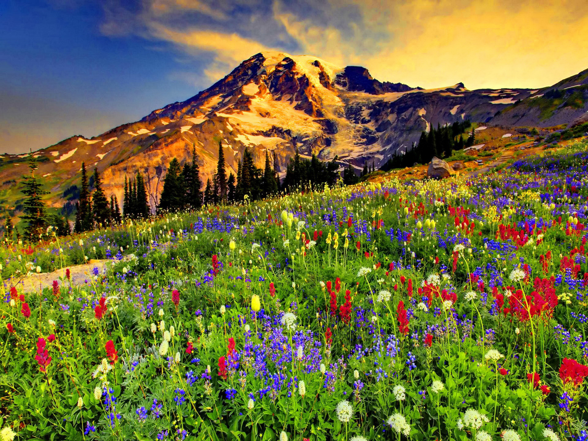 Flowers In The Mountains Wallpapers High Quality   Download Free Flowers In The Mountains wallpapers