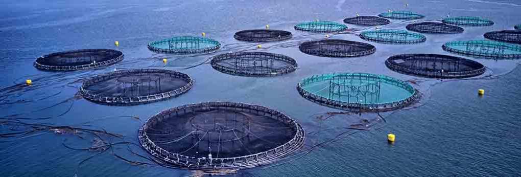 Desafios-de-Verão-em-aquacultura-com-Sidney-Fernandes