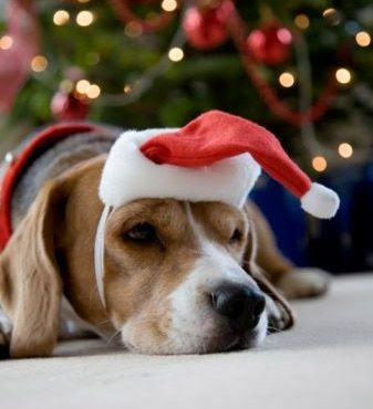 How The Lord Used A Beagle To Save Christmas!