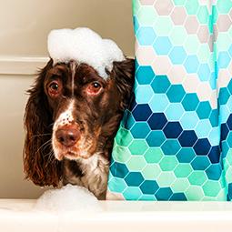 Baño-y-peluqueria-canina-para-boda-con-perro