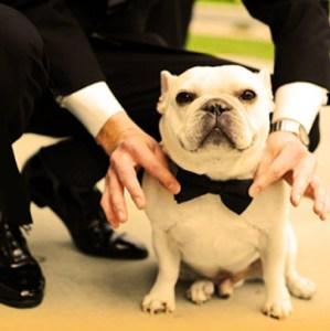 Pre-boda-con-perro-pajarita