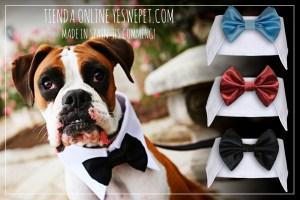 pajarita para perros en bodas