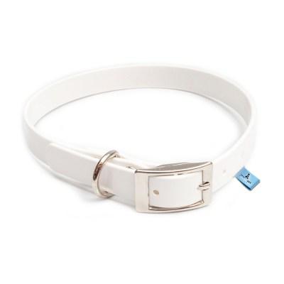 collar para perros en bodas y eventos especiales