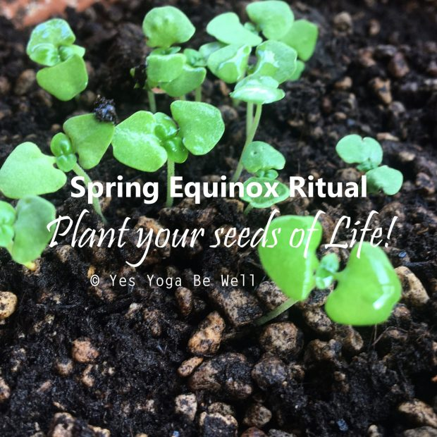 Plant seed ritual for Spring